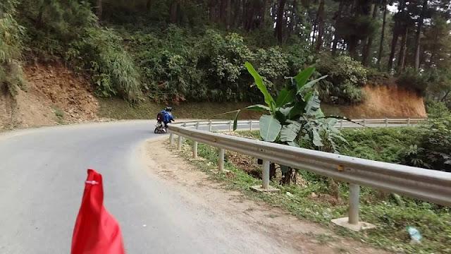 Yen Ming pine forest 1