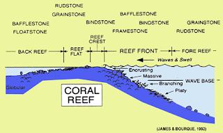 Mengenal Dua Sistem Lingkungan Pengendapan Batuan Karbonat: Marine shallow water-lacustrine system dan Deeper water facies of pelagic system