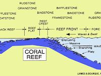 Mengenal Dua Sistem Lingkungan Pengendapan Batuan Karbonat
