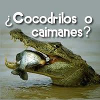 caimanes, cocodrilos