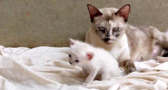 Kenapa Kucing Makan Anaknya Sendiri