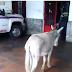 Bomberos que compararon al presidente con un burro podrían enfrentar hasta 20 años de prisión