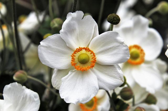 hoa đẹp nhất thế giới 7