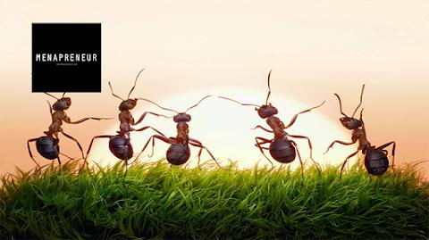 دراسة ألمانية : النمل يشعر بالإهتزازات و يميّز بين ذبذبات الرياح و الإنسان في حالات الخطر