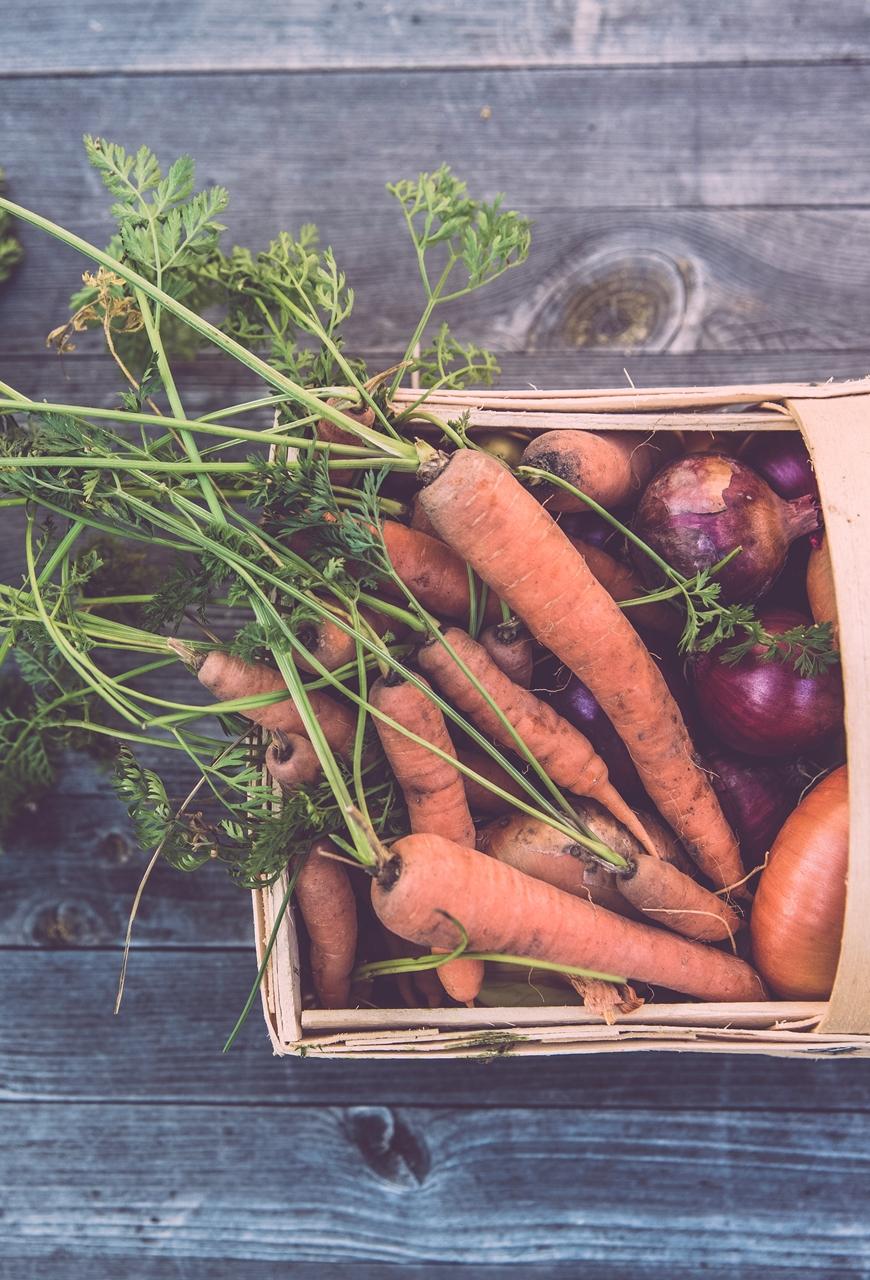 Dieta, wspomaganie i silne działanie antybakteryjne po odłożeniu antybiotyków