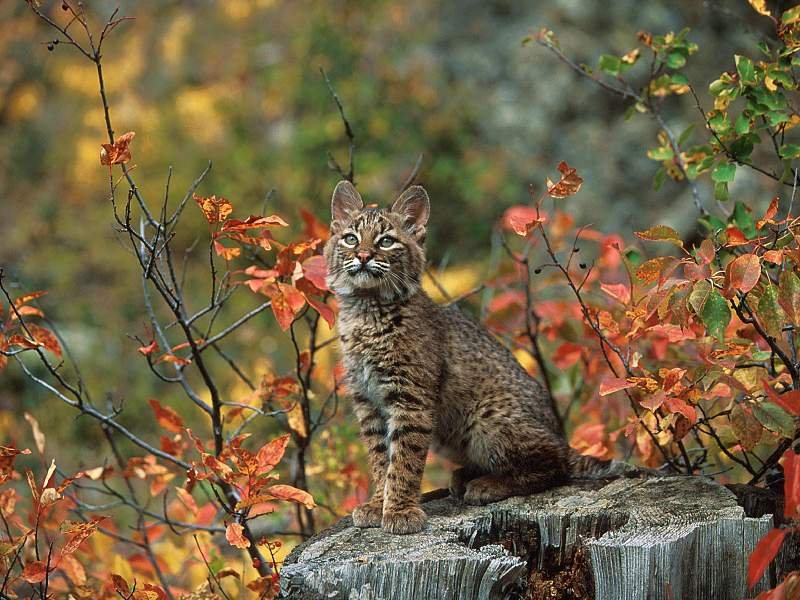 Fall Leaves And Pumpkins Wallpaper My Background Blog Bobcat Pictures