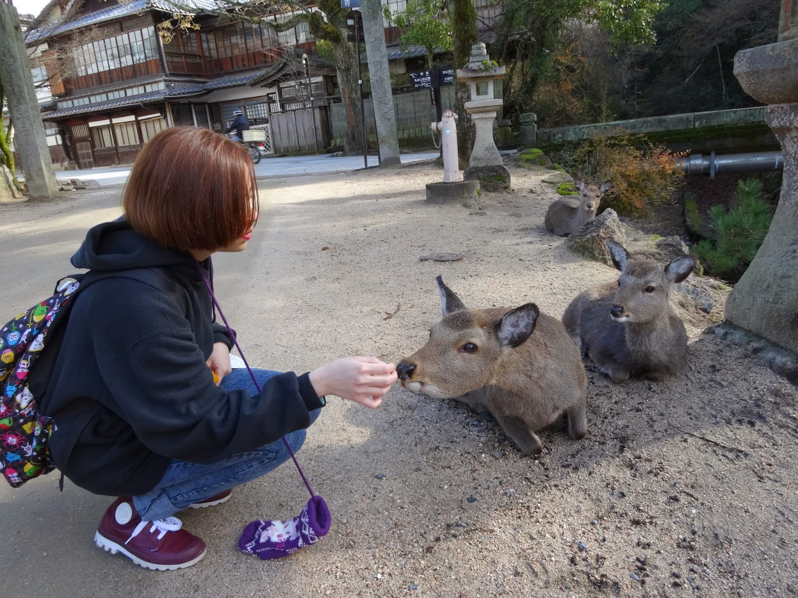 Feeding deer on Miyajima Island