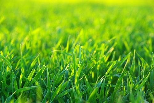 Choisir votre tondeuse en fonction de la hauteur de votre herbe