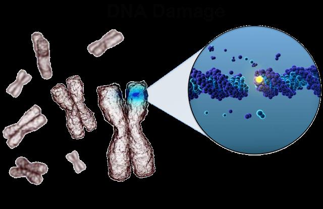 kerosakan DNA