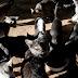 DESAFIO - Guarda responsável para reduzir superpopulação de animais