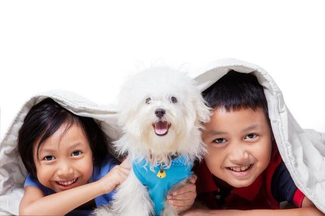 Binatang Dapat Membantu Perkembangan Mental Anak