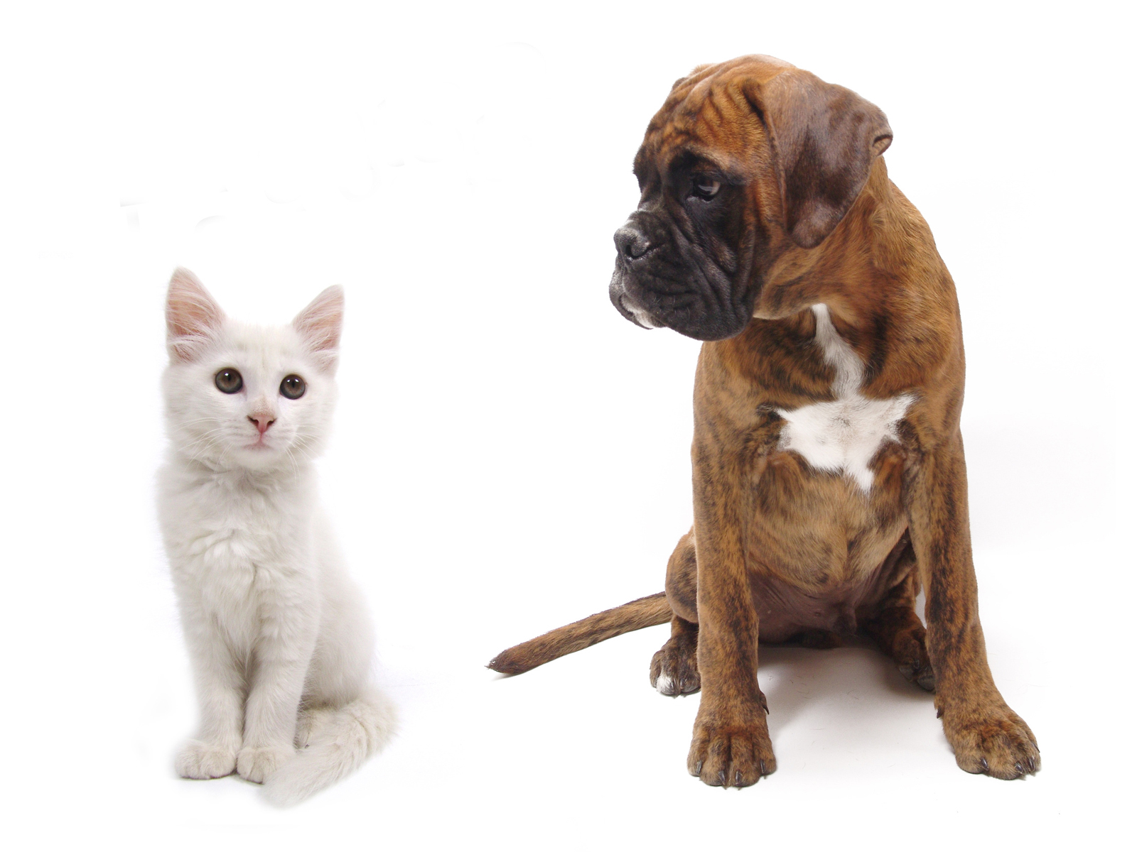Cat and dog together on a white background - Khoirulpage