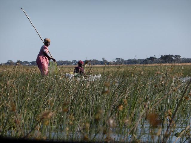 Mokoros en el Delta del Okawango