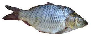 IKAN,FISH,NELAYAN,IKAN PALING MAHAL