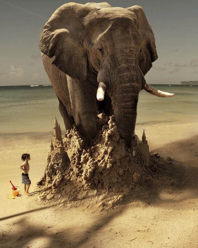 11-imagine-Marcel-van-Luit-Digital-Art-Animals-Photos-www-designstack-co
