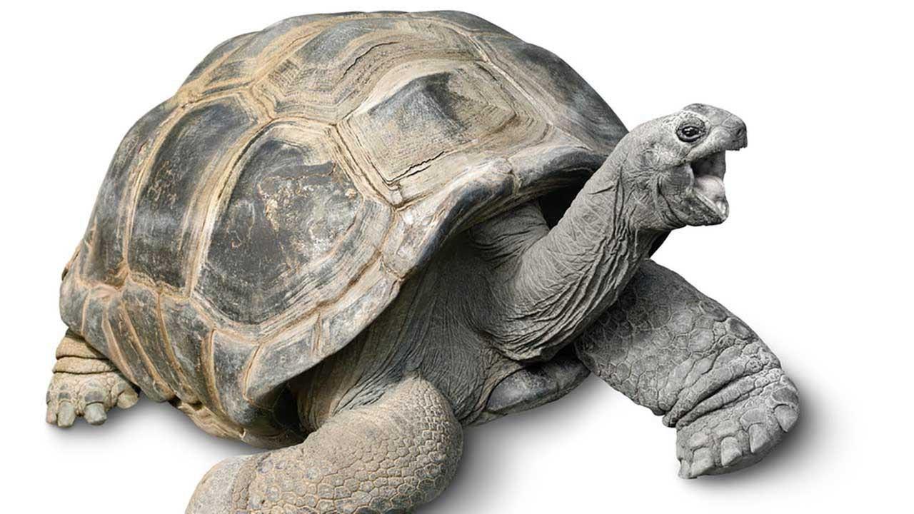 Animals That Start With T - Inspec Wallp Animals