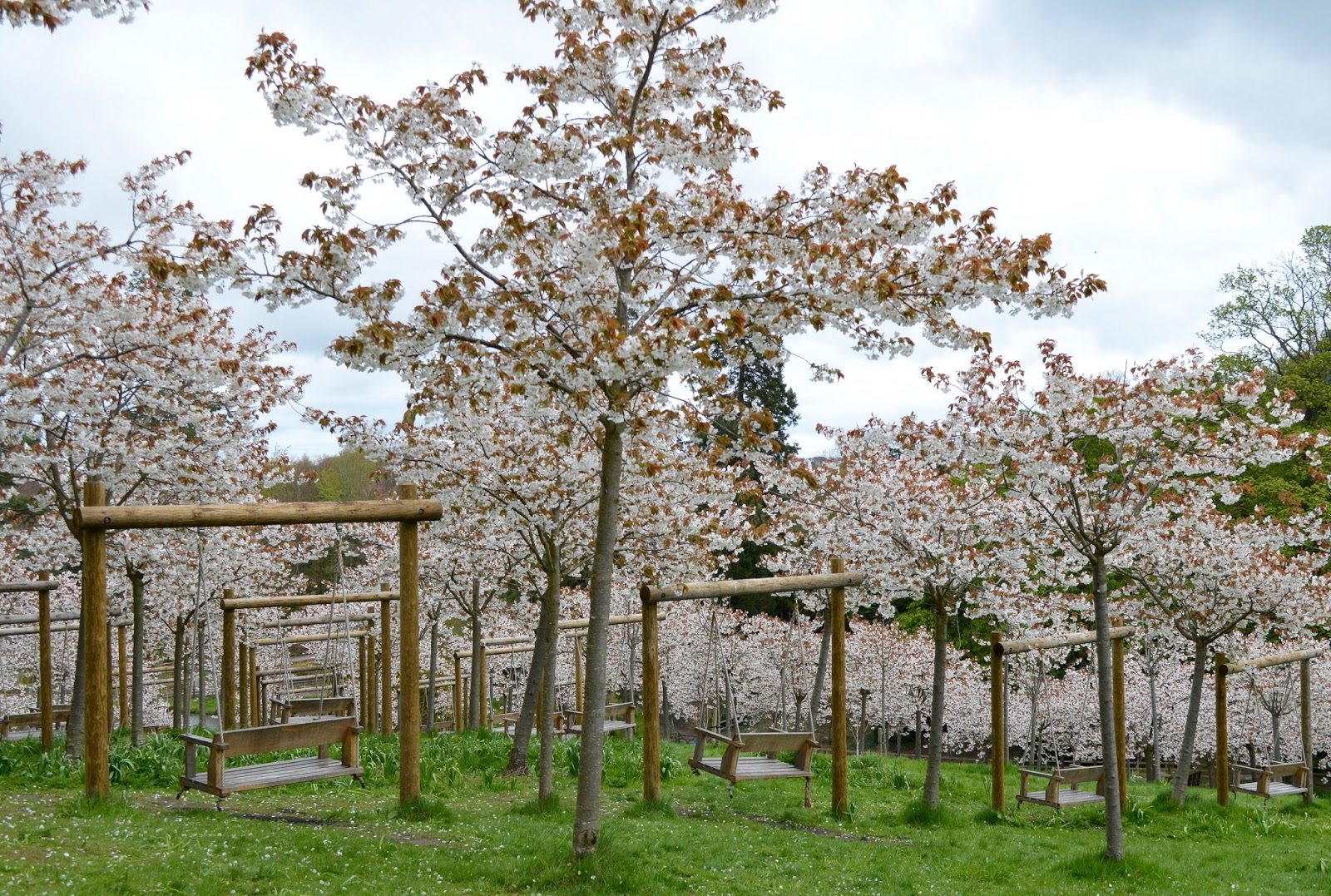 The Cherry Blossom Orchard at The Alnwick Garden - empty swings