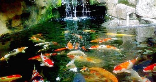 Cara mudah  membuat kolam ikan  koi