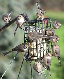 Bird food-pet-pets
