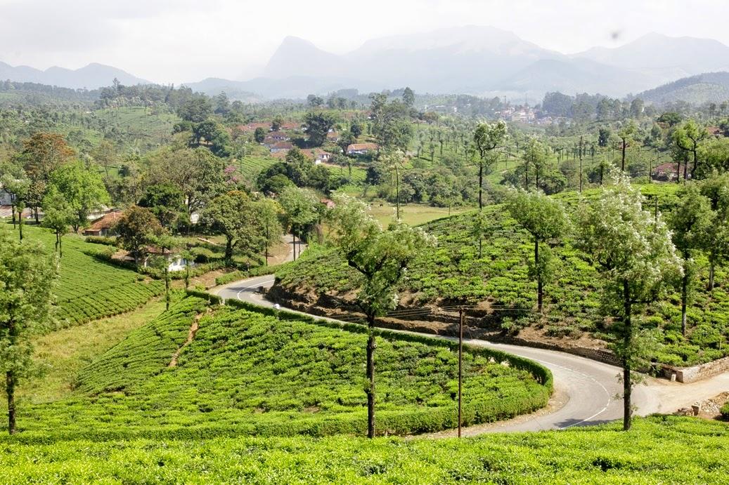 plantation de thé tamil nadu