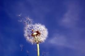polen-alerjisi-nedir