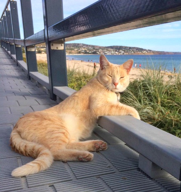 king beach cat
