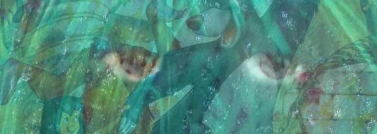 El libro de la selva, de Rudyard Kipling y Walt Disney - Cine de Escritor