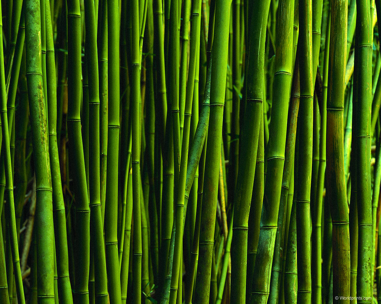 Textured Wallpaper Bamboo