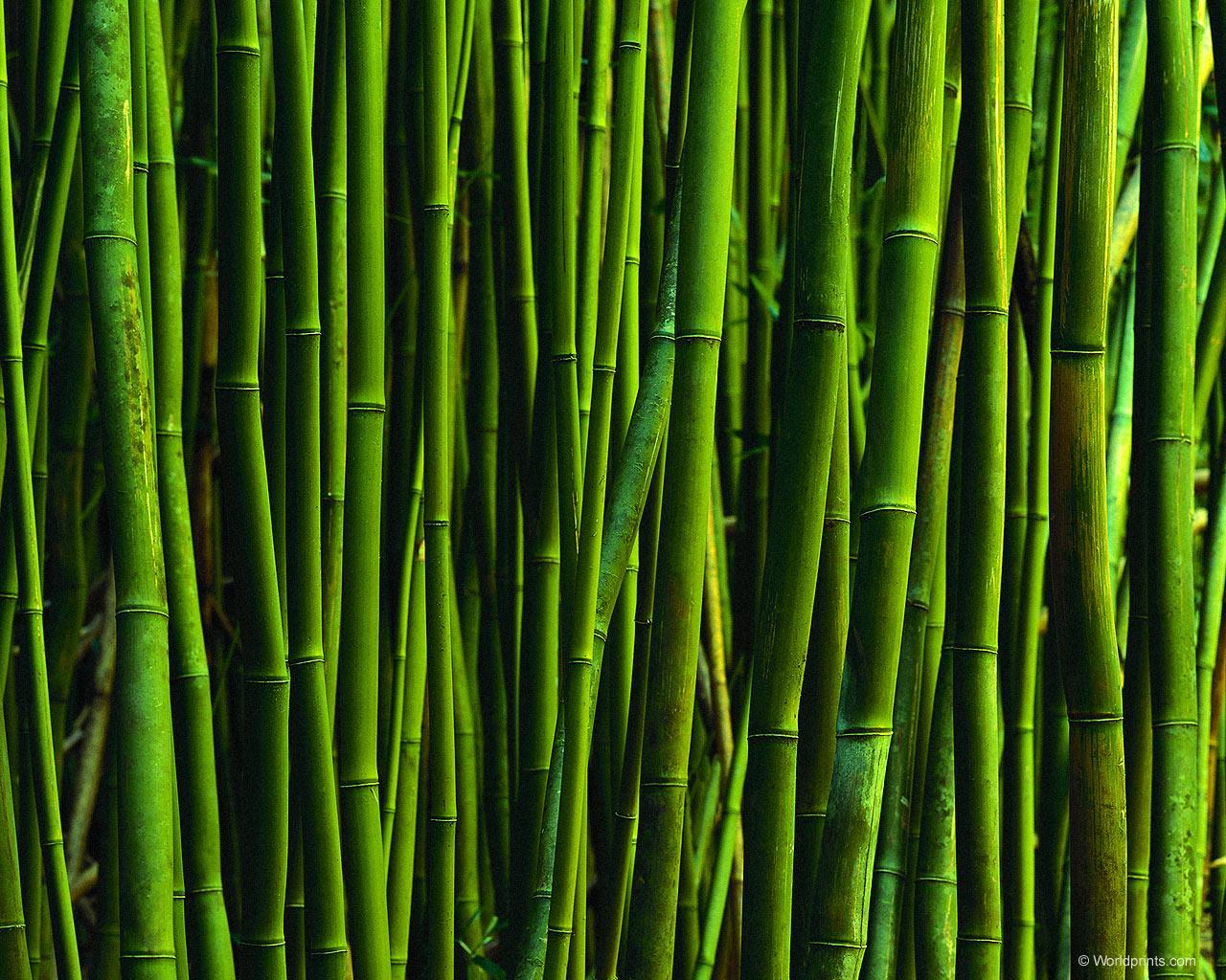 Textured Wallpaper Bamboo