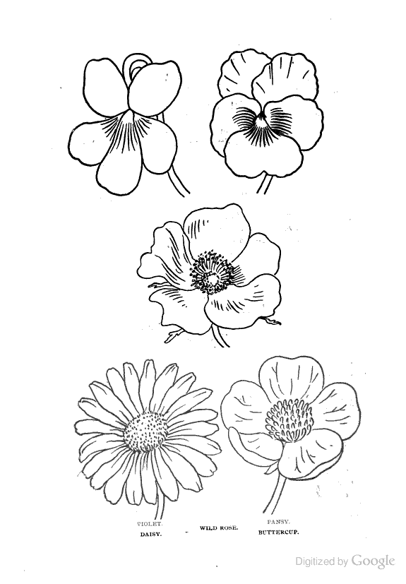 pansy flower drawing - photo #39