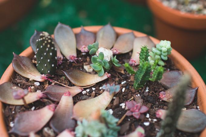 leaves, succulents