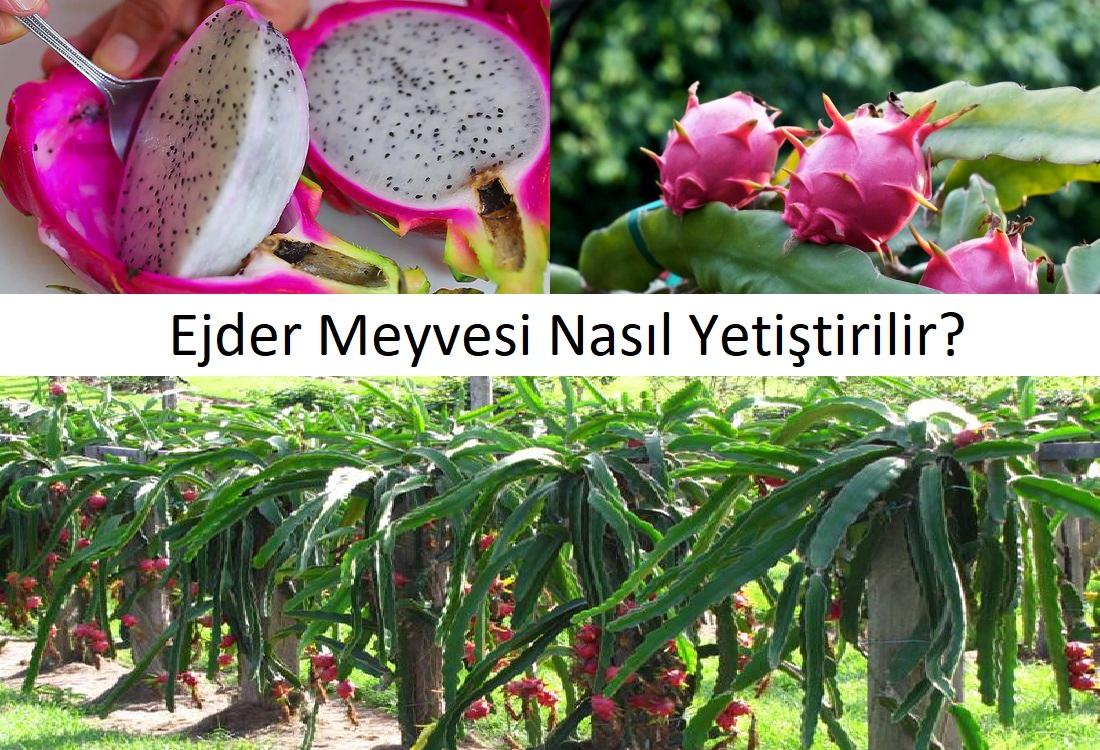 Kaktüs meyvesi nasıl yenir