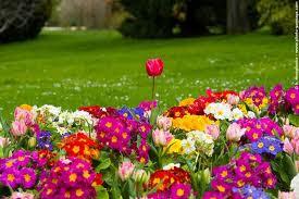 spring season in india