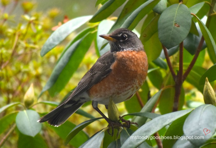 Seven Reasons To Be A Backyard Bird-Watcher | Ms. Toody Goo Shoes