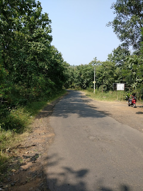 lonely roads wit trees canopy to pabe ghat
