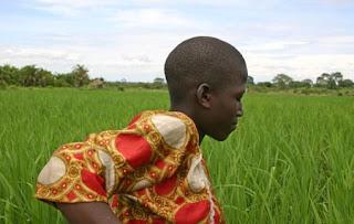 Farming African Proverbs