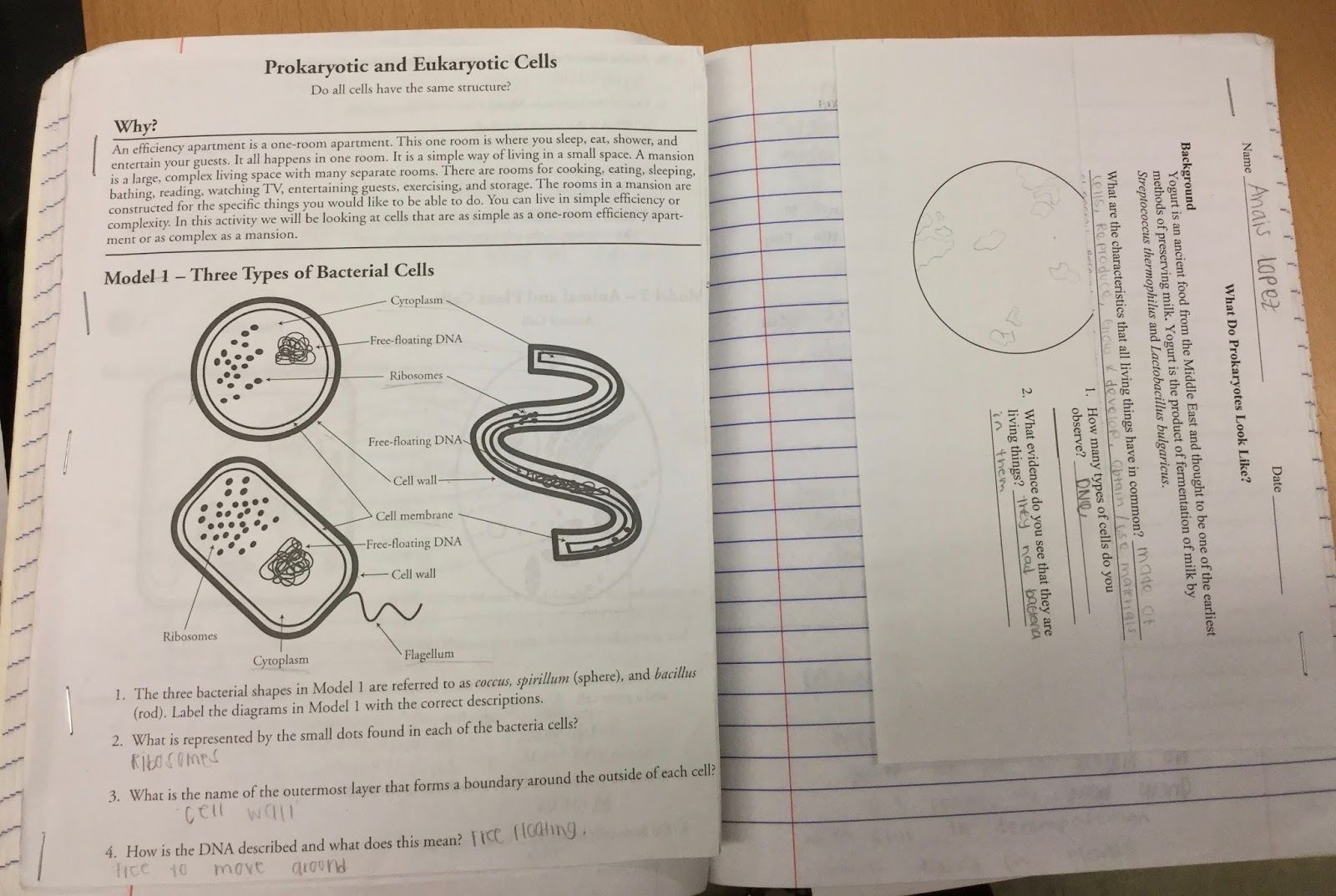 Teaching Science With Lynda Interactive Notebooks For