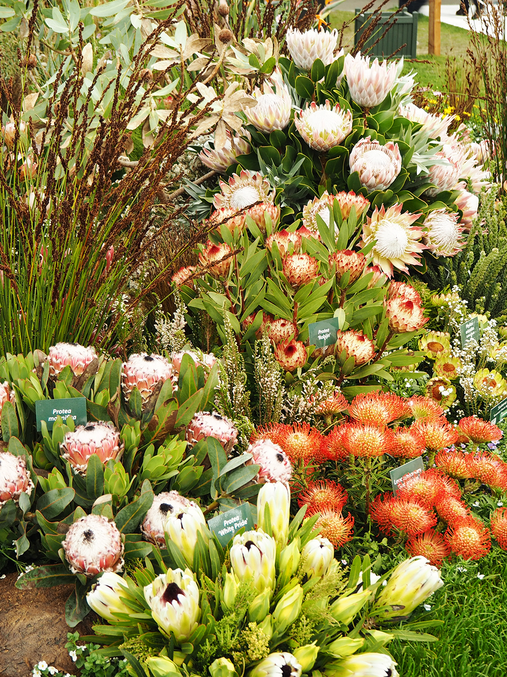 French For Pineapple Blog - RHS Chelsea Flower Show 2017 - Protea Garden