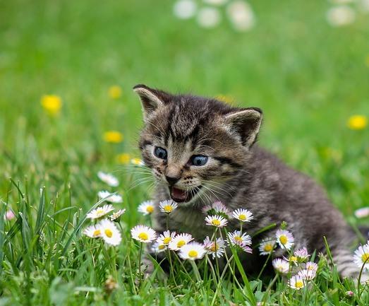 Contoh Cerita dalam Bahasa Inggris tentang Kucing dan Ayam