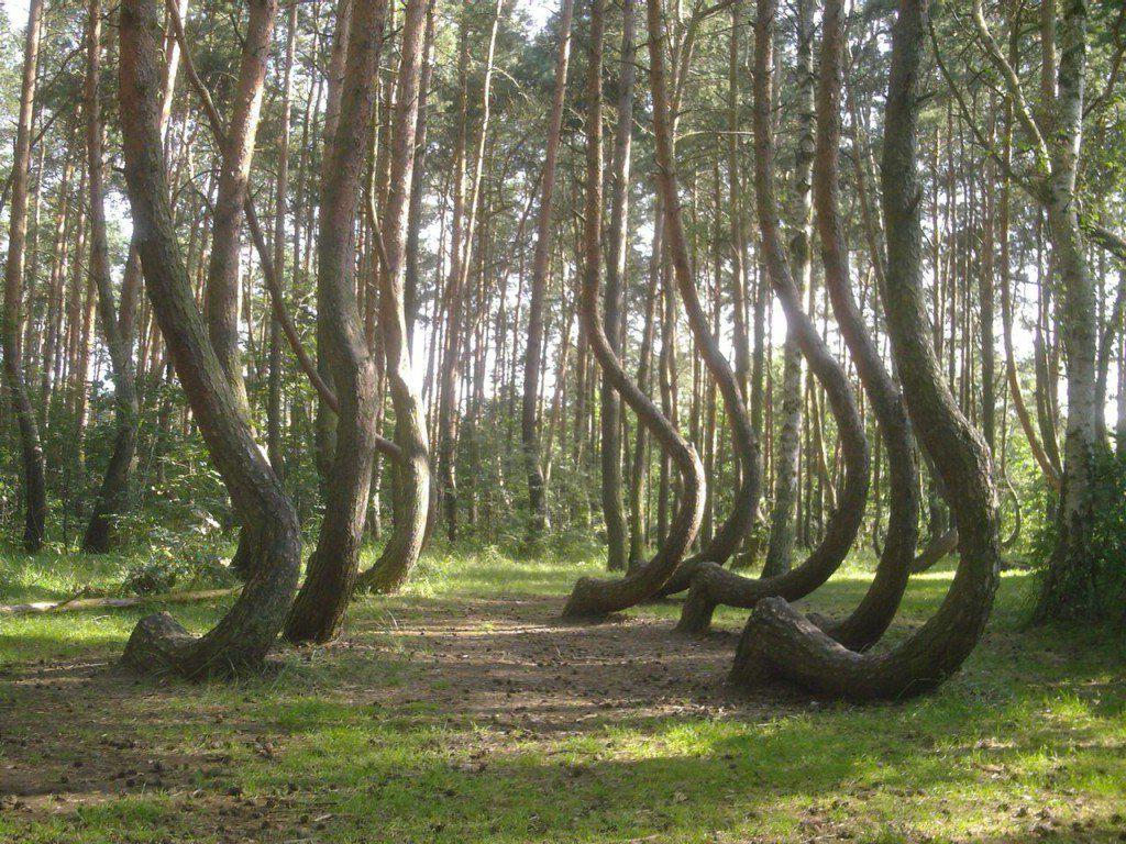 Gambar Segar Alam Pemandangan Hutan Pohon Jalan Indah
