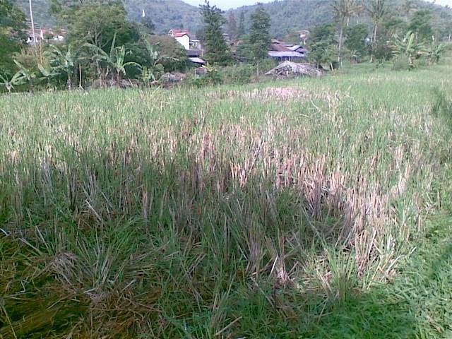 Foto(5049) Jual Tanah   tanah di jual, Lokasi strategis di Cipanas Jual tanah di cipanas jual tanah di puncak
