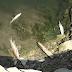 Sute de pești morți pe râul Suceava. ACET, amendată cu 35.000 de lei pentru că a deversat ape neepurate