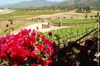 Pasado, presente y futuro del vino mexicano (Parte I)