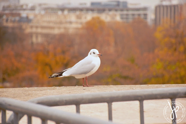 white bird on railings