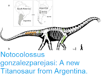 https://sciencythoughts.blogspot.com/2016/04/notocolossus-gonzalezparejasi-new.html