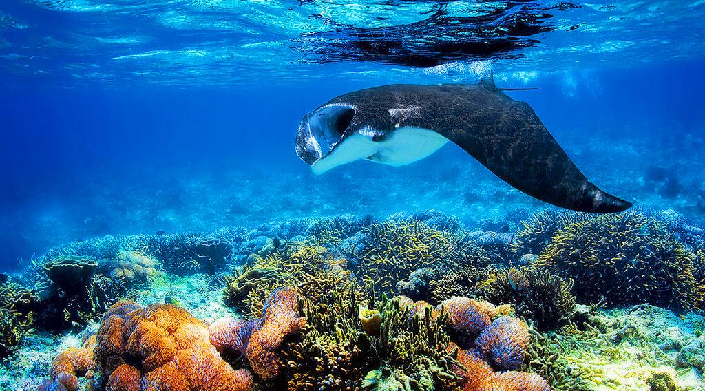 wisata rahasia indonesia wisata alam indonesia raja ampat terumbu karang dan ikan pari