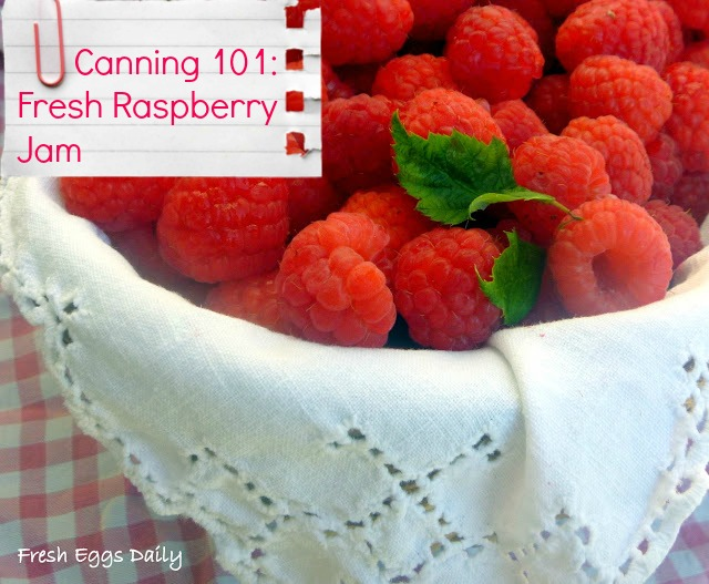 Canning 101: Easy Raspberry Jam my First Foray into Preserves | Fresh ...