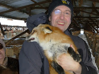 Dr. Lee Dugatkin poses with a tame fox