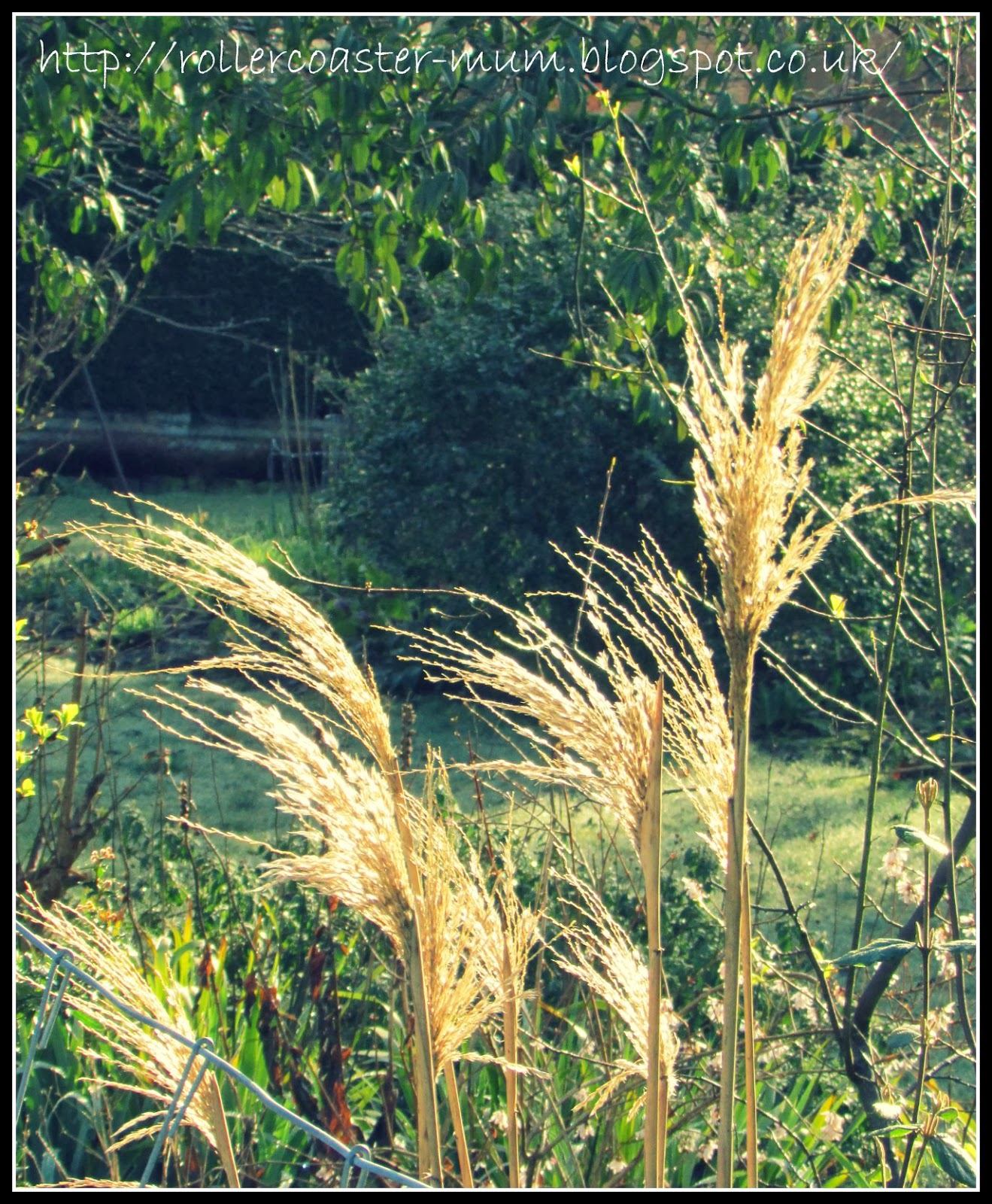 Grasses in the sunlight