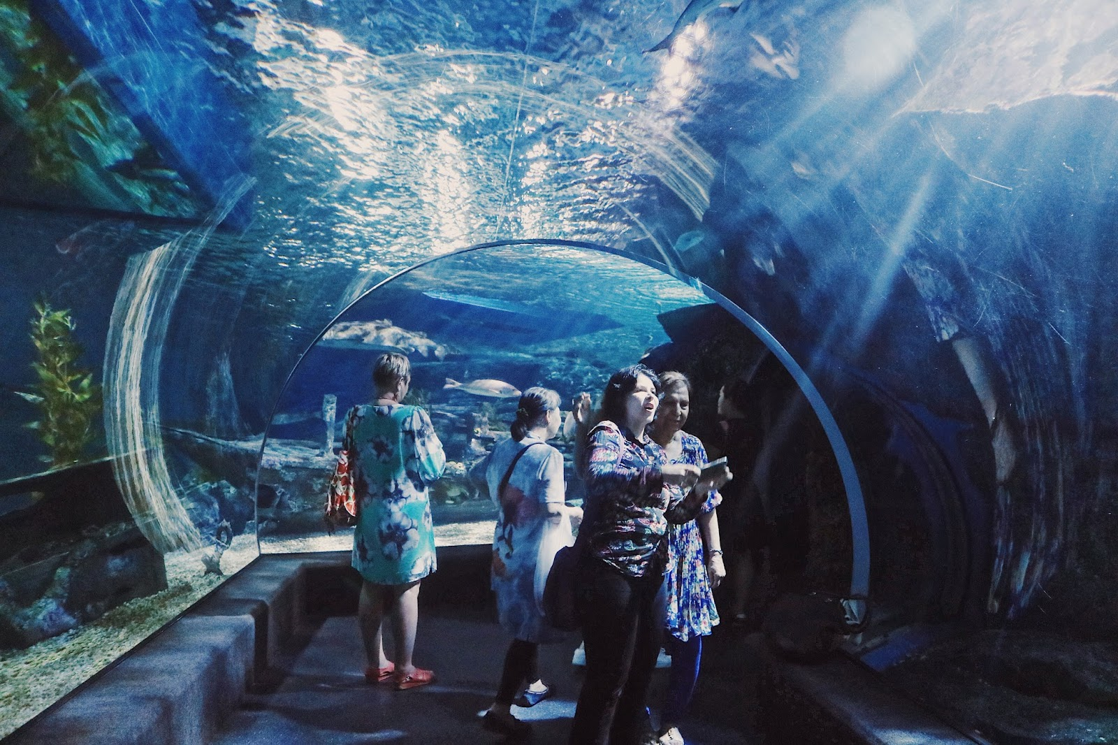 Sea Life Bangkok Ocean World And Khao San Road Living In The Moment Thailand Et Ticket Aquarium Only Child